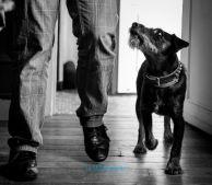 """Buck dans """"un homme, son chien et… Une croquette"""""""