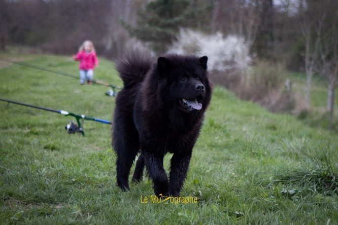 Ice T par le MuZographe, photographe pour chiens