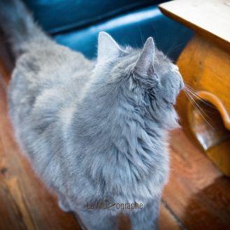 Chat par Le MuZographe, Photographe-chat-Chien