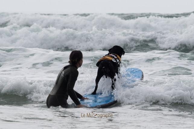 Toutous SURFEURS-112