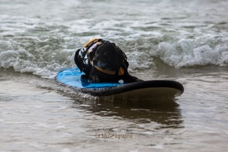 Toutous SURFEURS-113