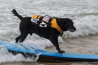 Toutous SURFEURS-115