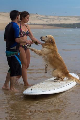 Toutous SURFEURS-122