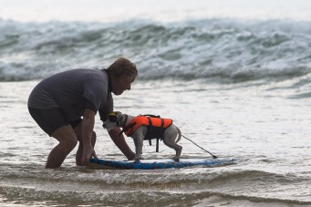 Toutous SURFEURS-127