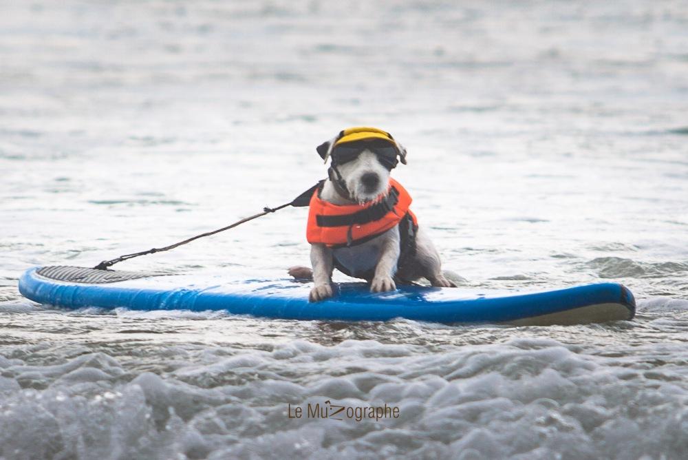 Toutous SURFEURS-136