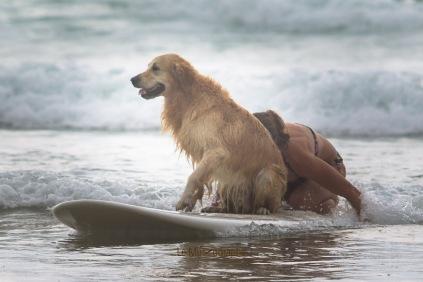 Toutous SURFEURS-138