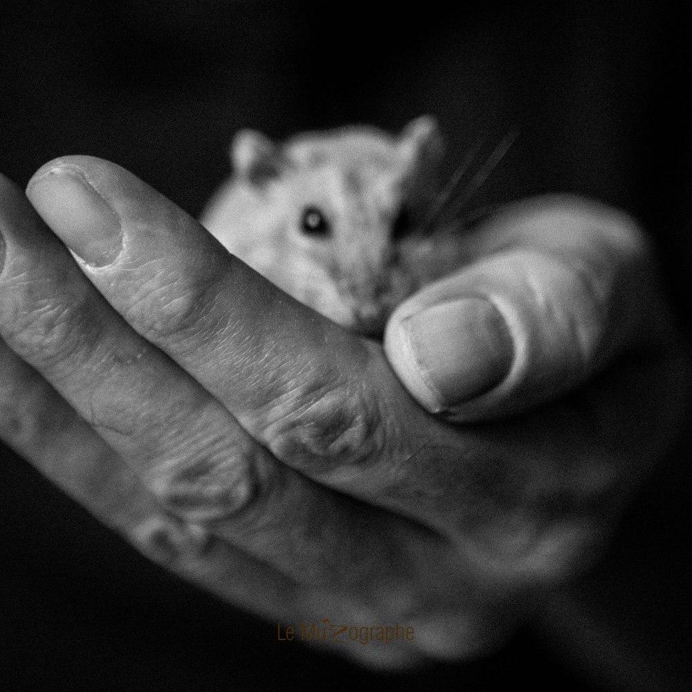 Quenotte © Nathalie Tiennot - Le MuZographe
