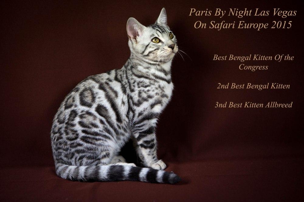 Paris By Night, Las Vegas © Le MuZographe