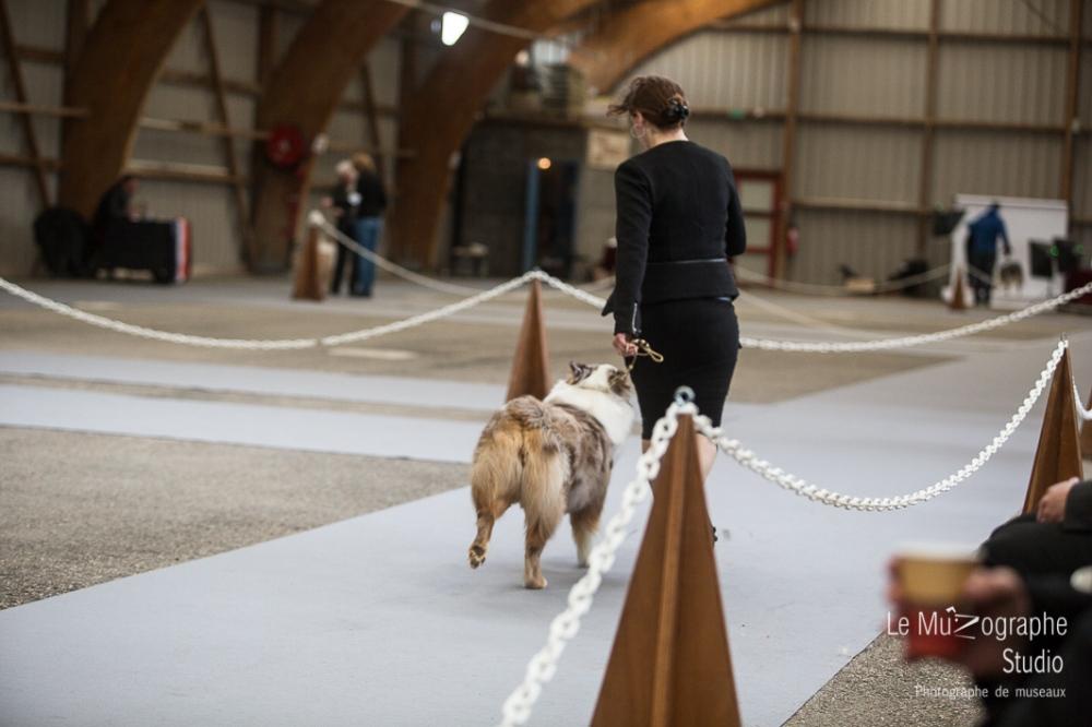 Nationale d'élevage de Bergers australiens, Cerilly (03) © Le MuZographe