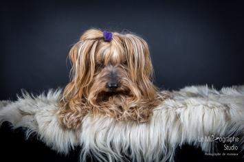 Bouba, le Yorkshire © Le MuZographe