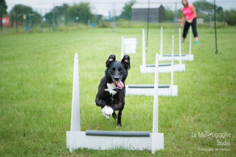 low MZ Flyball102