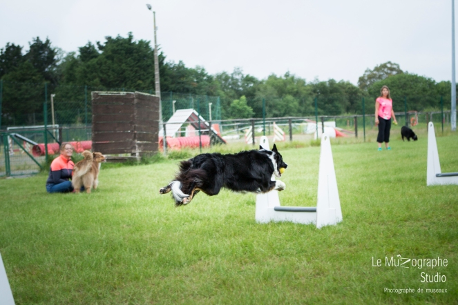 low MZ Flyball108