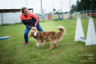 low MZ Flyball114