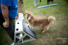 low MZ Flyball123