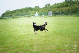 low MZ Flyball127