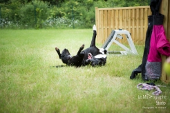 low MZ Flyball133