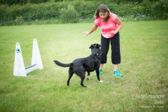 low MZ Flyball134