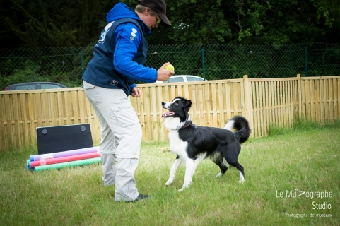 low MZ Flyball36