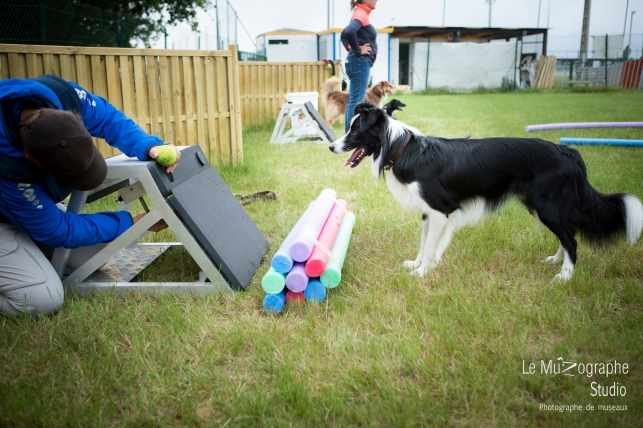 low MZ Flyball39