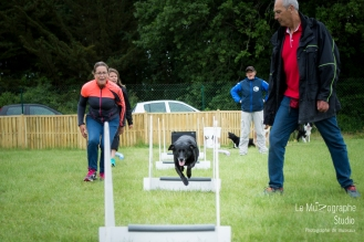 low MZ Flyball60