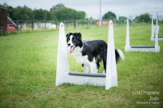 low MZ Flyball69