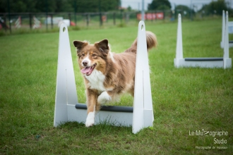 low MZ Flyball73