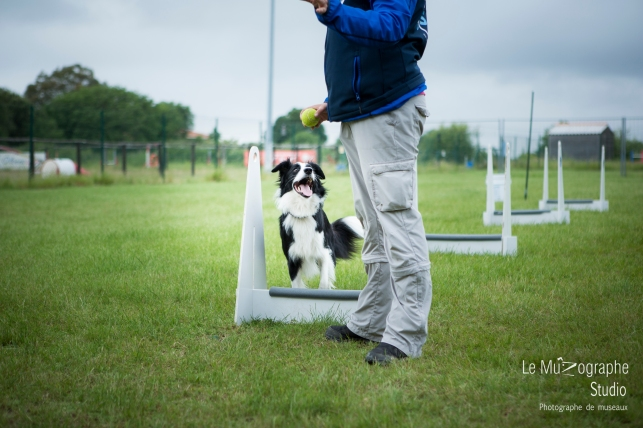 low MZ Flyball79