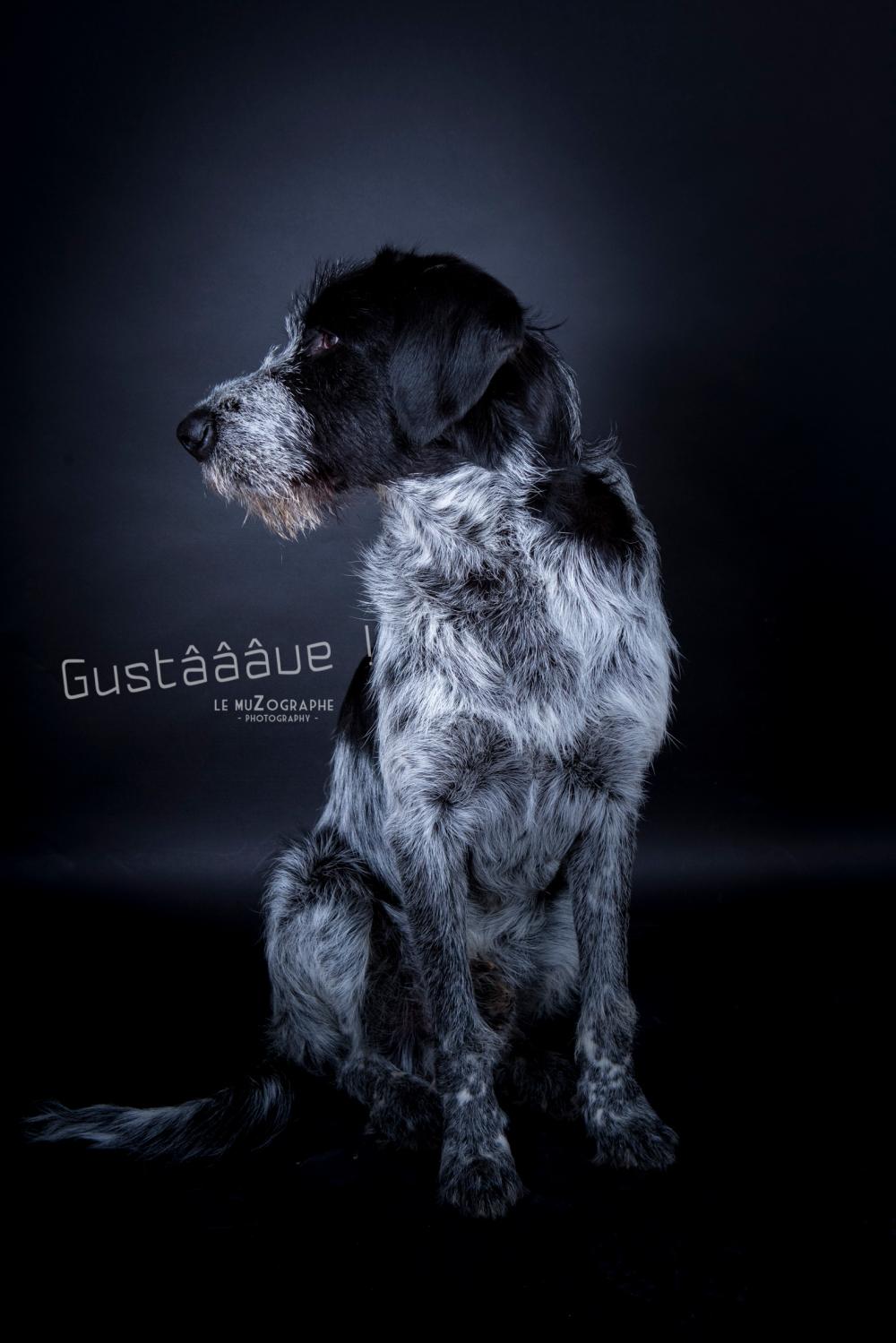 Gus gche19