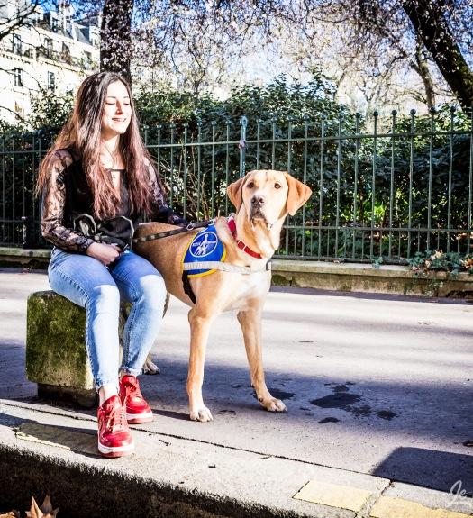 Labrador futur chien d'aveugle à Paris